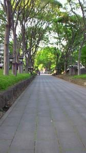 大宮氷川神社 参道