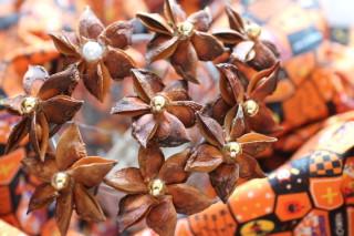 スターアニスの花